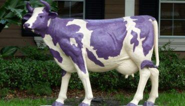 """Como """"espalhar"""" a sua idéia? Seth Godin e a vaca roxa"""